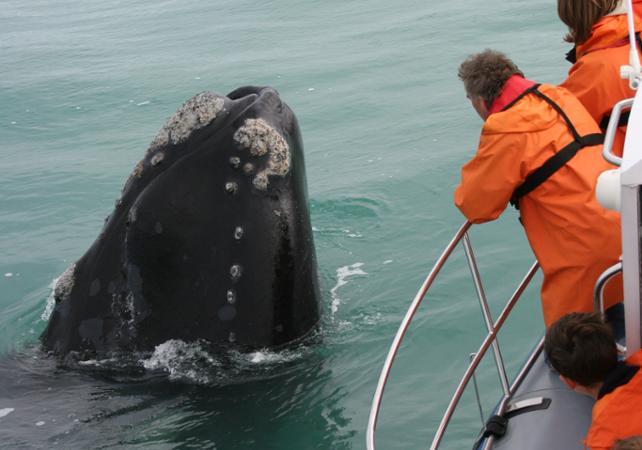 Photo Croisière d'observation des baleines au large de Dyer Island au départ de Gansbaai (à 2h de Cape Town et 30 mn d'Hermanus)