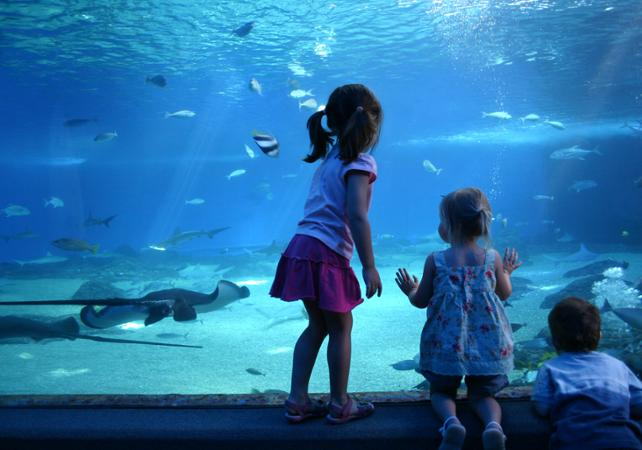 Billet coupe-file Aquarium SEA LIFE - Melbourne image 2