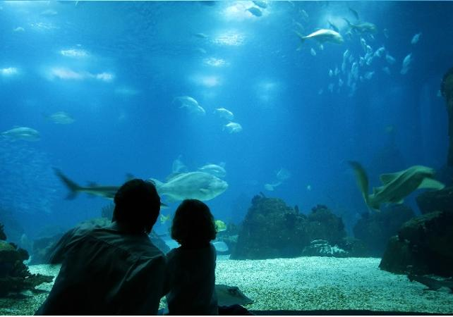 Billet coupe-file - Aquarium SeaLife de Munich - - Munich -