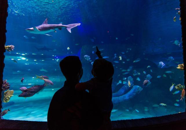 Tickets, museos, atracciones,Entradas para evitar colas,Acuario Sealife
