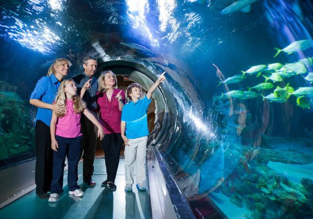 """Acuario Sea Life: Visita al aquarium """"SeaLife"""" en Orlando ..."""