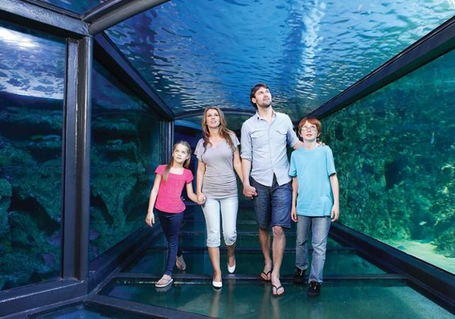 Billet 2, 3 ou 4 attractions : Madame Tussauds, WILD LIFE , SEA LIFE, Sydney Tower ou Manly SEA LIFE Sanctuary image 18