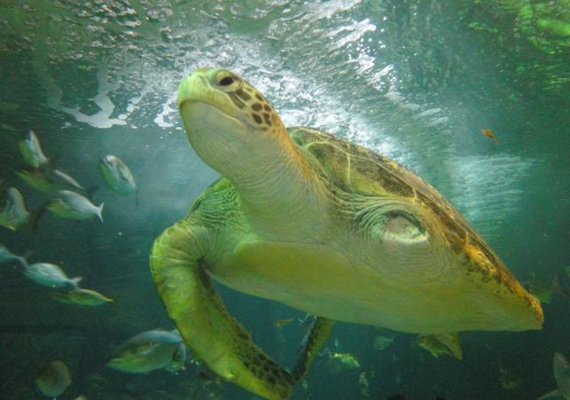 Billet 2, 3 ou 4 attractions : Madame Tussauds, WILD LIFE , SEA LIFE, Sydney Tower ou Manly SEA LIFE Sanctuary image 6