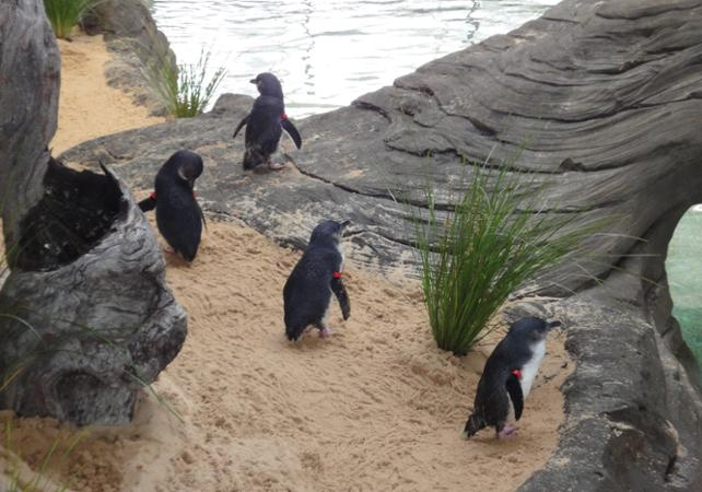 Billet 2, 3 ou 4 attractions : Madame Tussauds, WILD LIFE , SEA LIFE, Sydney Tower ou Manly SEA LIFE Sanctuary image 5