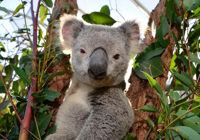 Billet 2, 3 ou 4 attractions : Madame Tussauds, WILD LIFE , SEA LIFE, Sydney Tower ou Manly SEA LIFE Sanctuary image 9