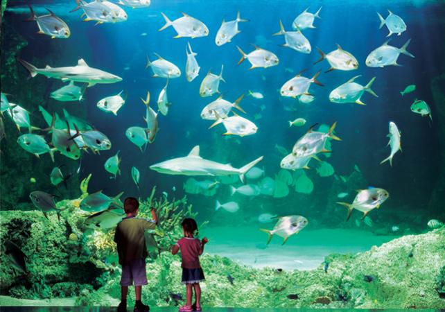 Billet 2, 3 ou 4 attractions : Madame Tussauds, WILD LIFE , SEA LIFE, Sydney Tower ou Manly SEA LIFE Sanctuary image 19