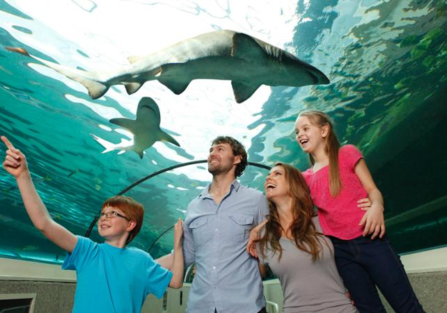 Billet 2, 3 ou 4 attractions : Madame Tussauds, WILD LIFE , SEA LIFE, Sydney Tower ou Manly SEA LIFE Sanctuary image 20