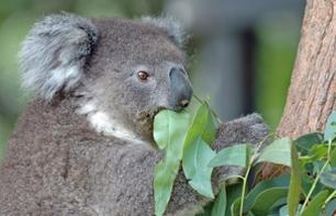 Breakfast with the koalas + Guided tour of WILD LIFE Sydney Zoo - Priority-access ticket