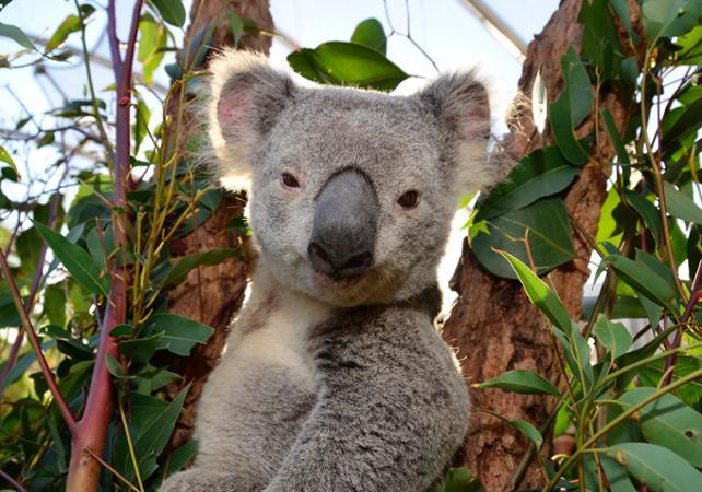 Petit déjeuner avec les Koalas + Visite guidée du WILD LIFE Sydney Zoo - Billet coupe-file image 4