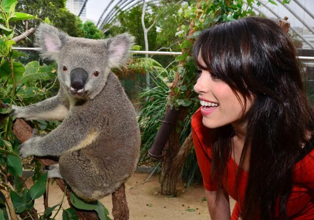 Petit déjeuner avec les Koalas + Visite guidée du WILD LIFE Sydney Zoo - Billet coupe-file image 3