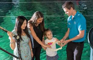 Guided tour of the SEA LIFE Sydney Aquarium - With a behind the scenes tour and animal feeding