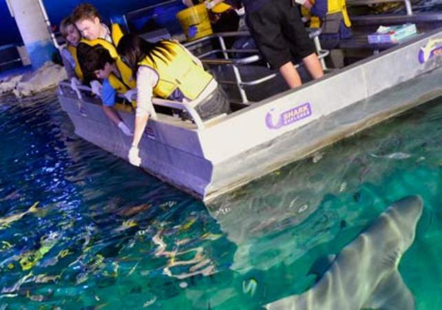 Visite guidée de l'aquarium SEA LIFE de Sydney - Avec tour des coulisses et nutrition des animaux image 2