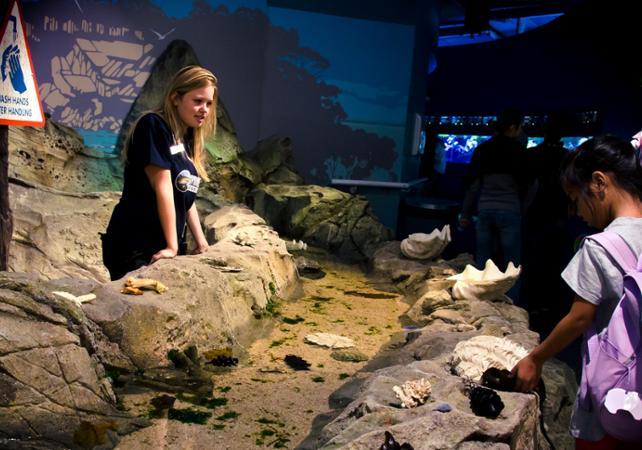 Visite guidée de l'aquarium SEA LIFE de Sydney - Avec tour des coulisses et nutrition des animaux image 6