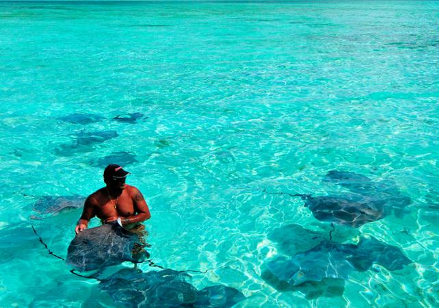 Snorkeling With A Mask And Tuba With Rays And Sharks At Bora Bora In French