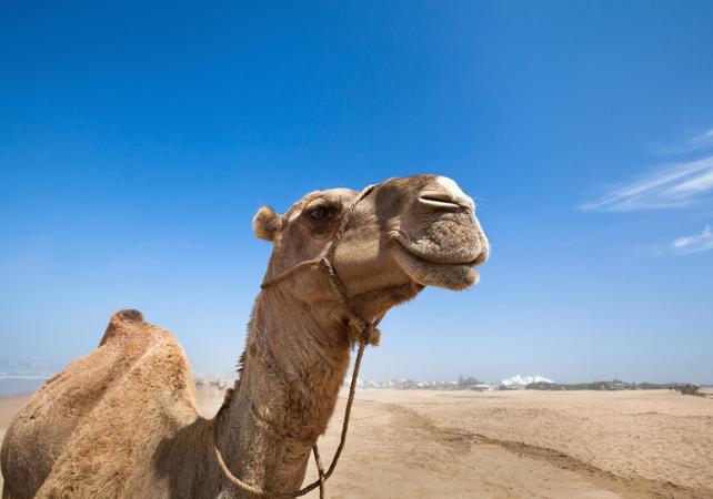 ,Agadir Tour