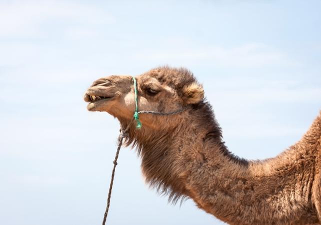 Balade en dromadaire ou à cheval dans une palmeraie de Marrakech - Marrakech - Ceetiz