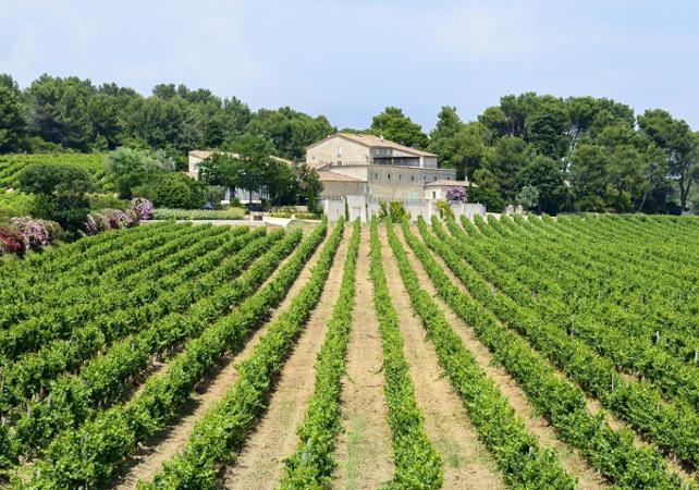 Demi-journée autour des vignes et oliviers du Languedoc : visites et dégustations - Montpellier -