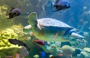 Skip-the-Line Tickets to the New England Aquarium – Boston