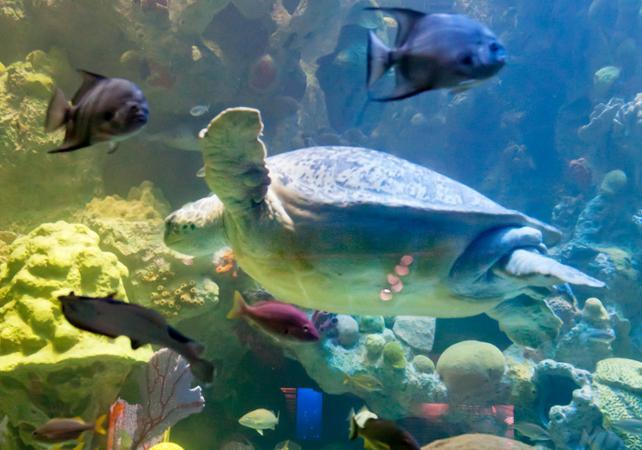 New england aquarium skip the line tickets to the new New england aquarium tickets