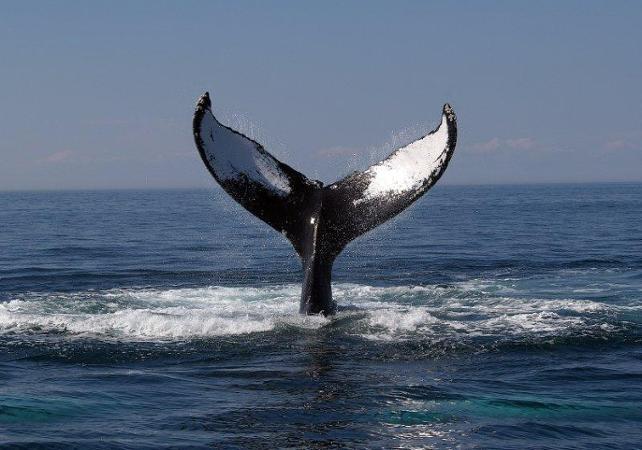 Croisière d'observation des baleines – Au départ de Newport Beach - Los Angeles - Ceetiz
