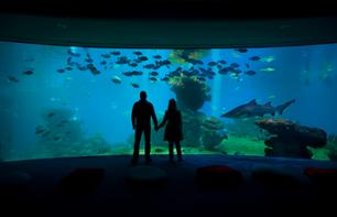 Day Trip to the Palma Aquarium