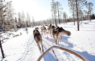Dog sledge ride in Lapland - 10km - Rovaniemi