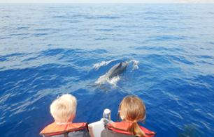 Zodiac boat cruise and whale and dolphin observation - with swimming break - 2 hour - Funchal, Madère
