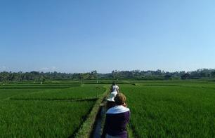 Paddy Field Trek and Visit to Goa Gajah