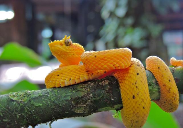 Tour d'exploration de la nature au coeur de la forêt - A proximité du Parc national Braulio Carrillo - San José (Costa Rica) -