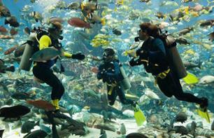 Discover scubadiving in the Arabian Gulf - Departure from Dubai