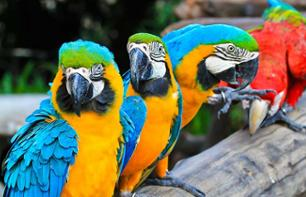Jurong Bird Park ticket -Singapore