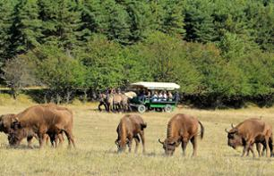Carriage Safari in the Monts d'Azur Natural Reserve – 80 minutes from Cannes and Nice