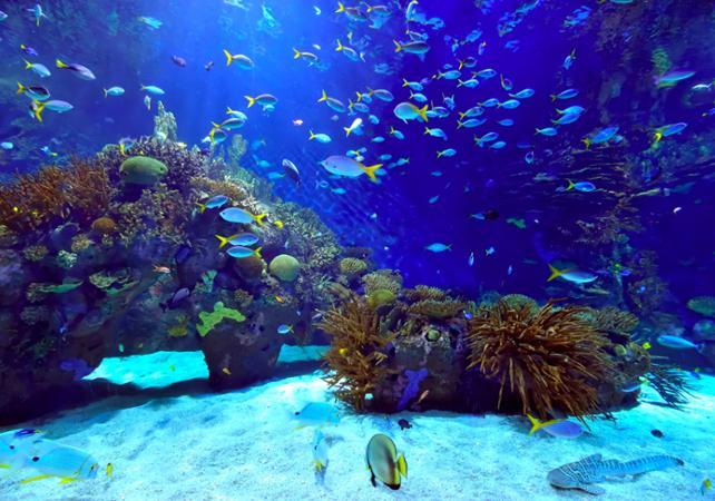 Bangkok Tickets For Siam Ocean World Bangkok Aquarium