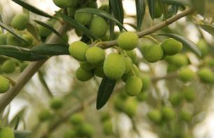 Discover the Secrets of Andalusian Olive Oil