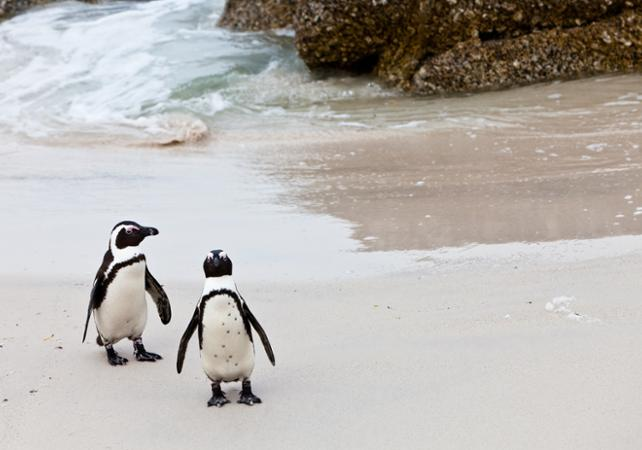Photo Excursion jusqu'au Cap de Bonne-Espérance : découverte des plus beaux sites de la péninsule