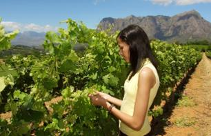 Garden Route Tour & Wine Tasting