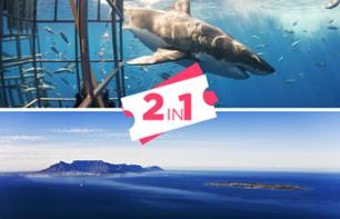 Ticket to Robben Island + Shark Cage Diving - Cape Town