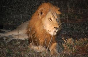 Kruger Park Safari: 4 Days / 3 Nights – Return transport from Johannesburg