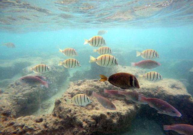 Plongée avec tuba dans les récifs coralliens de Hanauma Bay - Hawaii (Oahu, Maui, Big Island...) -