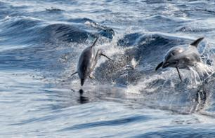Dolphin Observation Cruise - Gran Canaria