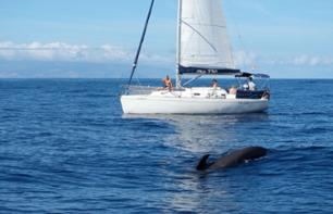 Sailboat cruise with drinks included - Tenerife - 3 hours