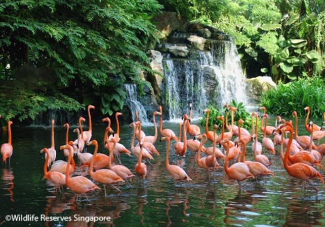 Visite du parc aux oiseaux de Jurong - Singapour -