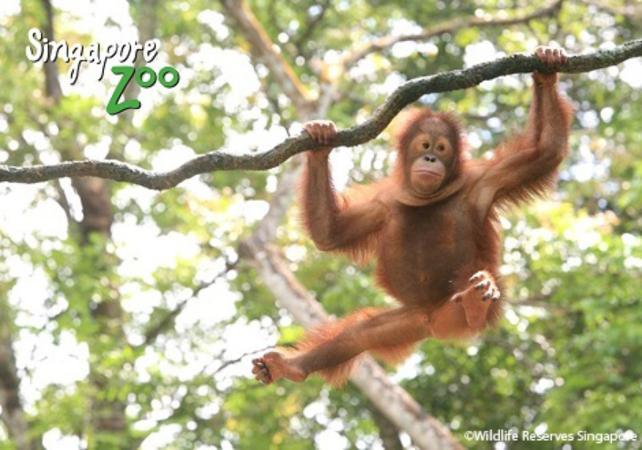 Matinée au zoo de Singapour - Singapour -