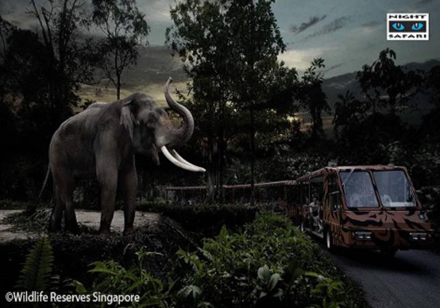 Entrée au safari nocturne de Singapour - Singapour -