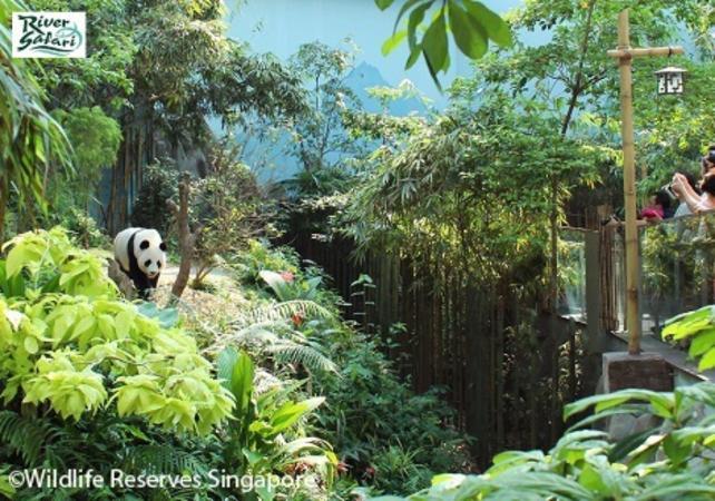 Tickets duo de safaris - Entrée aux parcs River Safari et Night Safari - Singapour -