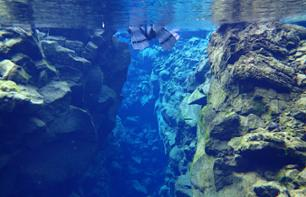 Snorkeling in the Silfra Fissure - 40 minutes from Reykjavik - Optional Transport from Reykjavik