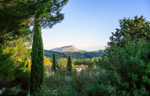 Discover the Provencal Vineyards