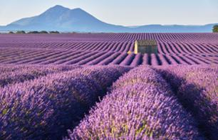 Visit the Lavender Fields and a Distillery