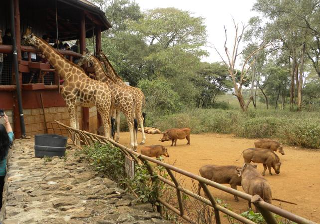 Photo Visite guidée à la rencontre des girafes et des éléphants à Nairobi