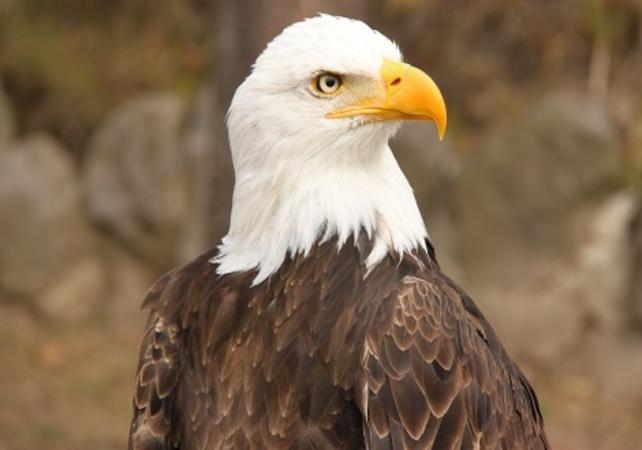 Rencontre avec les Condors à Otavalo image 5